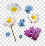 Vector set of branches of lilac daisy and forget-me-not flowers isolated on a white background. Vector set of branches lilac, daisy and forget-me-not flowers on vector illustration