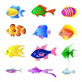 Vector set of bright fish isolated on the white. Background Stock Photography