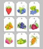 Sweet berries labels stock photos