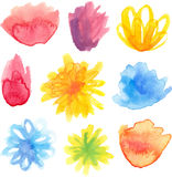 Vector set of bright watercolor floral blossoms Royalty Free Stock Photography