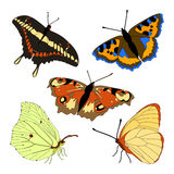 Vector set of butterflies. Royalty Free Stock Images