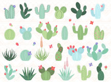 Vector Set of Cactus and Succulent Plants Royalty Free Stock Images