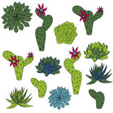 Vector set of cactus and succulents Stock Photos