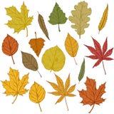 Vector Set of Cartoon Autumn Tree Leaves. vector illustration
