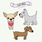 Vector set of cartoon dogs - dachshund, Scottish Terrier and chihuahua on white background. Stock Photography