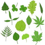 Vector Set of Cartoon Green Tree Leaves. Leaf Types Collection stock illustration