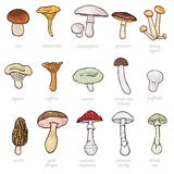 Vector set of cartoon illustration -  mushrooms Stock Photo