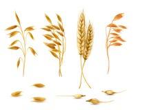 Vector set of cereal plants for package design vector illustration