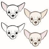 Vector set of  chihuahua's face. Hand-drawn  illustration. Stock Photography