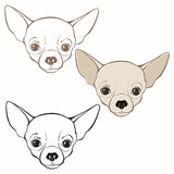 Vector set of  chihuahua's face. Hand-drawn  illustration. Royalty Free Stock Photography