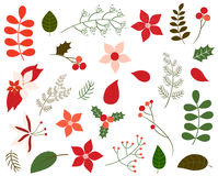Vector set of Christmas foliage. In green and red colors - leaves, winter flowers, floral elements, poinsettia in flat style for greeting cards and invitations Royalty Free Stock Images