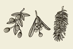 Vector set with Christmas plants. Royalty Free Stock Photo