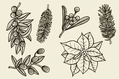 Vector set with Christmas plants. Royalty Free Stock Photos
