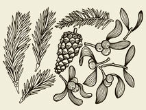 Vector set with Christmas plants. Royalty Free Stock Photography