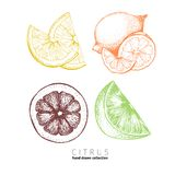 Vector set of citrus fruits. Orange, lemon, lime and bloody orange slices. Stock Photography