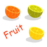 Vector set of citrus fruits in the section Stock Photos