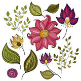 Vector Set of Colored Contour Flowers and Leaves Royalty Free Stock Photography
