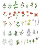 Vector set of colored flowers, herbs, plants. royalty free illustration