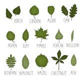Vector set of colored green leaf royalty free illustration