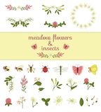 Vector set of colored wild flowers elements and insects. Collection of bee, bumblebee, dragonfly, ladybug, moth, butterfly vector illustration