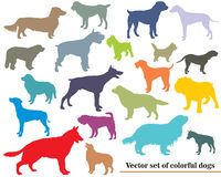 Vector set of colorful dogs silhouettes. Vector set of colorful isolated different breeds dogs silhouettes on white background Stock Images