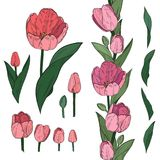 Vector set of colorful tulip elements. Decorative endless border stock illustration