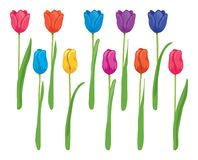 Vector set of colorful tulips Royalty Free Stock Photography