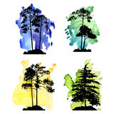 Vector set of conifer trees Royalty Free Stock Photo