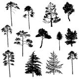 Vector set of conifer trees Royalty Free Stock Image