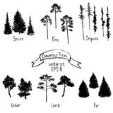 Vector set of conifer trees Stock Images