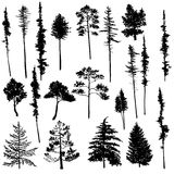 Vector set of conifer trees Royalty Free Stock Photos