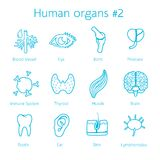 Vector set of contour icons with human organs Royalty Free Stock Image