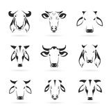 Vector set of cow head Royalty Free Stock Photography