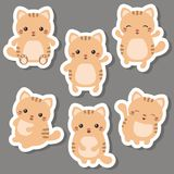 Set of cute cats. Vector set of cute cats on white background. Cats made in cartoon style Stock Photos