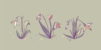 Vector set of cute fresh spring snowdrop flowers in pastel tones.  Royalty Free Stock Photo