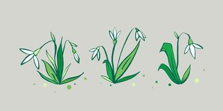 Vector set of cute fresh spring snowdrop flowers. New flowers of 2018 Royalty Free Stock Photography