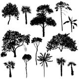Vector set of deciduous trees. Hand drawn isolated natural elements vector illustration