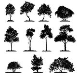 Vector set of deciduous trees. Hand drawn isolated natural elements royalty free illustration