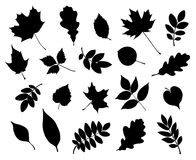 Vector set of decorative autumn leaf silhouettes. royalty free illustration