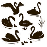 Vector set of decorative birds. Swan with nestling. Swan silhouette Royalty Free Stock Photography