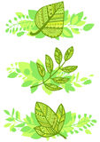 Vector set of decorative green leafs compositions Stock Photography