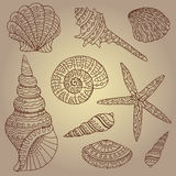 Vector set of decorative seashells Stock Photo