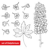 Vector set with Delphinium or Larkspur. Flower, bunch, bud and leaf in black isolated on white background. Floral elements. Vector set with Delphinium or vector illustration