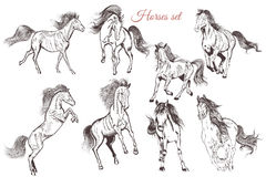 Vector set of detailed hand drawn horses for design Royalty Free Stock Image