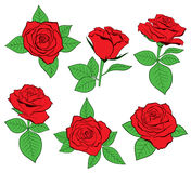 Vector set of detailed, isolated outline red Roses in black color. Royalty Free Stock Image