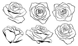 Vector set of detailed, isolated outline Rose bud sketches in black color. Royalty Free Stock Photos