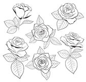 Vector set of detailed, isolated outline Rose bud sketches with leaves in black color. Vector illustration for design. On white background royalty free illustration
