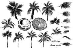 Vector set of detailed palm trees for design Stock Images