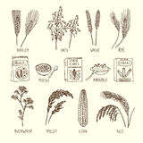 Vector set of different cereals. Muesli, wheat, rice and others. Hand drawn illustrations vector illustration
