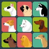 Vector set of different dogs icons in trendy flat style. Royalty Free Stock Photo
